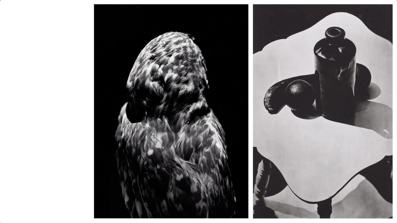 Bande annonce Noir & Blanc – RMNGP — © 2020, Pierre Pierre